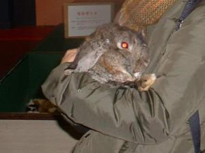 うさぎの抱っこ:富士サファリパーク
